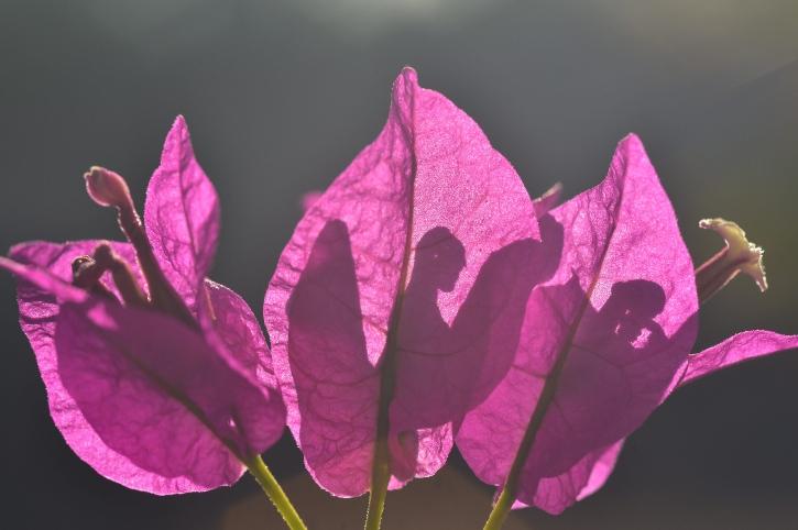 fiori estivi dieci specie da piantare in giardino