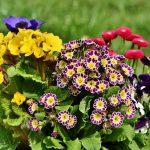 Fiori estivi: i 10 resistenti al sole da piantare in giardino
