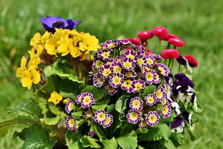 fiori estivi come prendersene cura