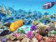 Barriera corallina: tutti i segreti nascosti in fondo al mare