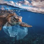 Emergenza plastica in mare: quali sono le conseguenze?