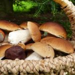 Funghi commestibili: quali sono e come riconoscerli