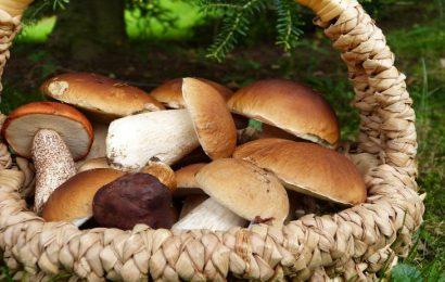 funghi commestibili perché fanno bene alla salute
