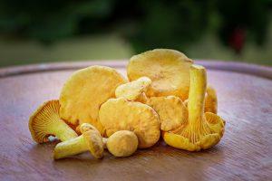 funghi commestibili Cantharellus cibarius