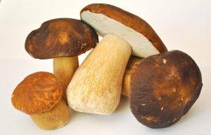 funghi commestibili in cucina