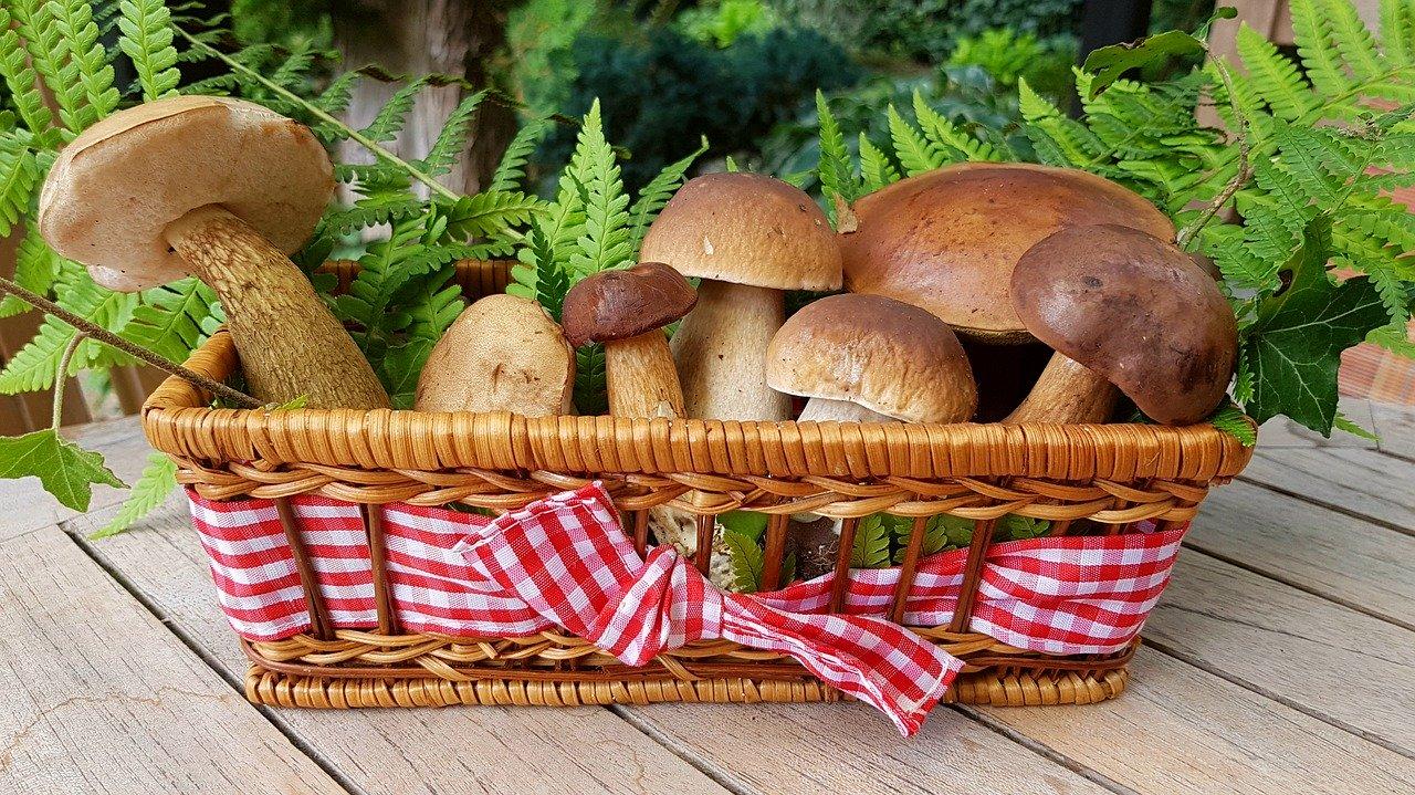 funghi commestibili e funghi velenosi