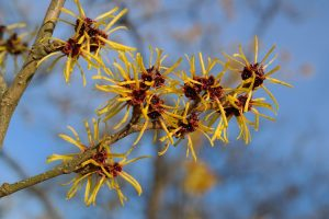 piante invernali che resistono alle temperature rigide