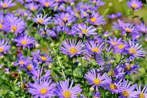 piante invernali come sceglierle