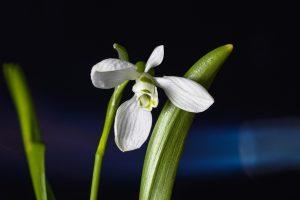 piante invernali stella del mattino