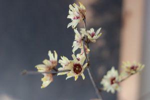piante invernali leggenda