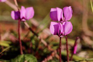 piante invernali quale scegliere