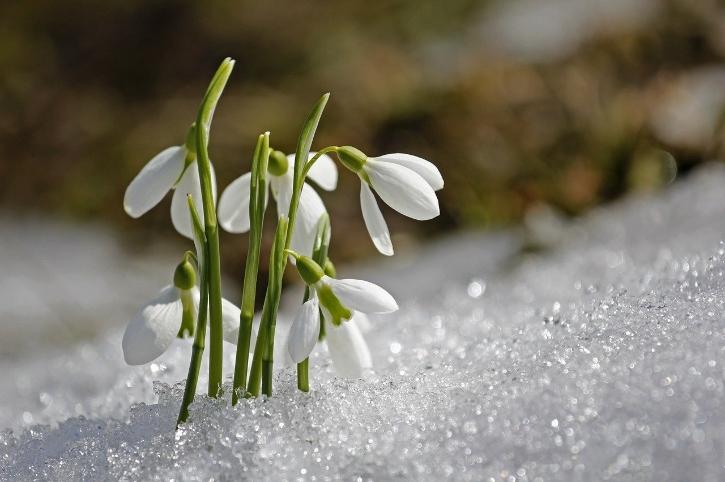 piante invernali dieci che resistono al freddo