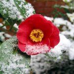 Piante invernali: le 10 da esterno che fioriscono con il freddo