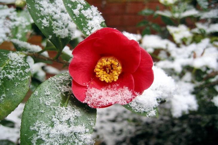 piante invernali giardino e balcone