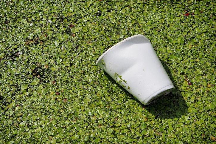 bio plastics europe sostenibilità ed economica circolare
