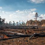 SOS deforestazione Amazzonia: rischio collasso entro il 2064