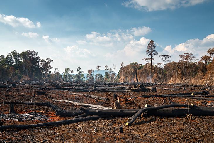 Deforestazione amazzonia SOS cause e conseguenze