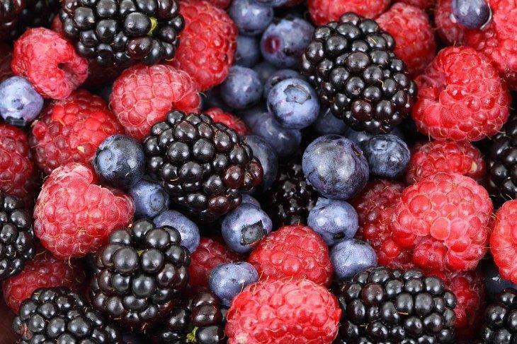 coltivare frutti di bosco come farlo a casa