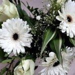Fiori bianchi: i 10 più eleganti per abbellire casa e giardino