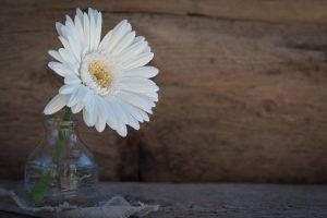 fiori bianchi antismog