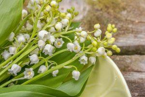 fiori bianchi per spose