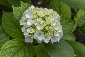 fiori bianchi eleganti