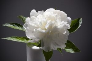 fiori bianchi bouquet