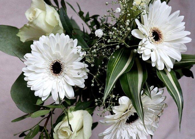 fiori bianchi per casa e giardino