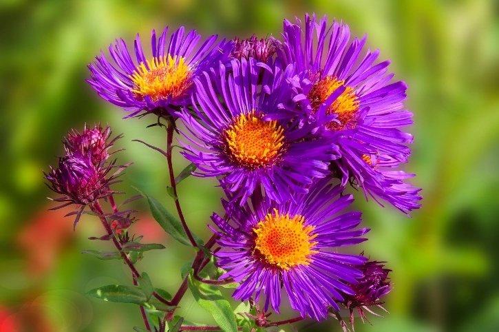 piante da esterno resistenti al sole e al freddo quali scegliere