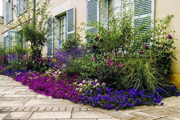 piante da esterno resistenti al sole e al freddo varietà